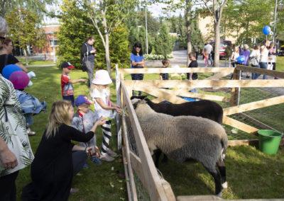 Ihmiset silittevätä lampaita Elojuhlilla 2019.