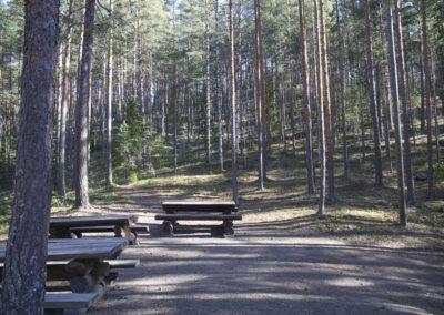 Hirsipuupöytiä metsässä.