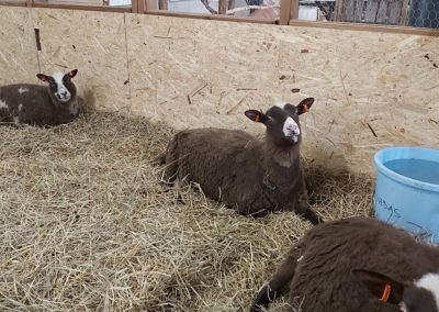 lampaita karsinassa.