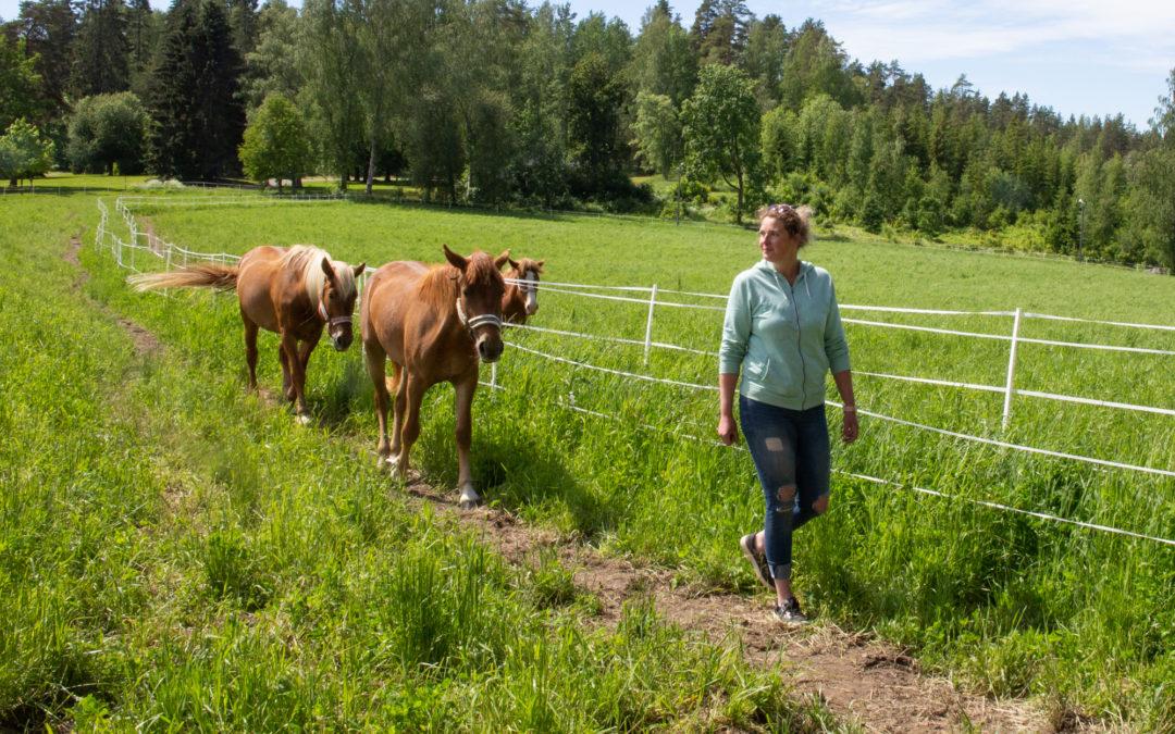 Hevoset saapuivat takaisin Kiipulaan